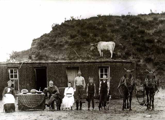 Pioneer sod house with cow on roof.